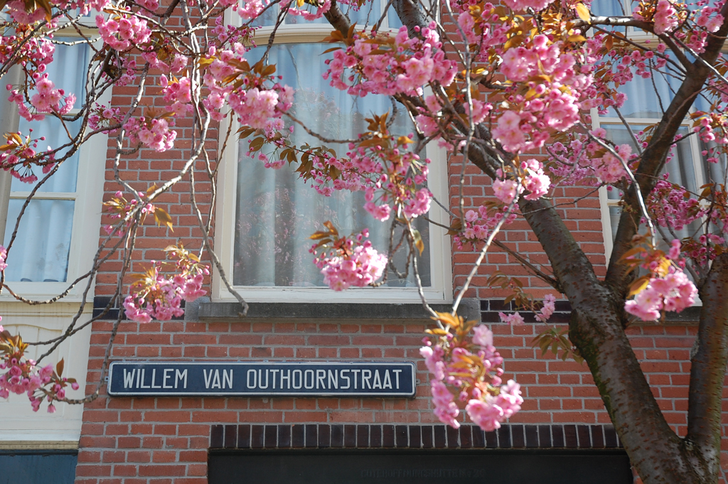 Willem Van Outhoornstraat Bloesem Eind April