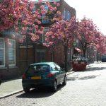 Brief 14 Juli Over Voorkeur Voor Boomsoort In De Willem Van Outhoornstraat