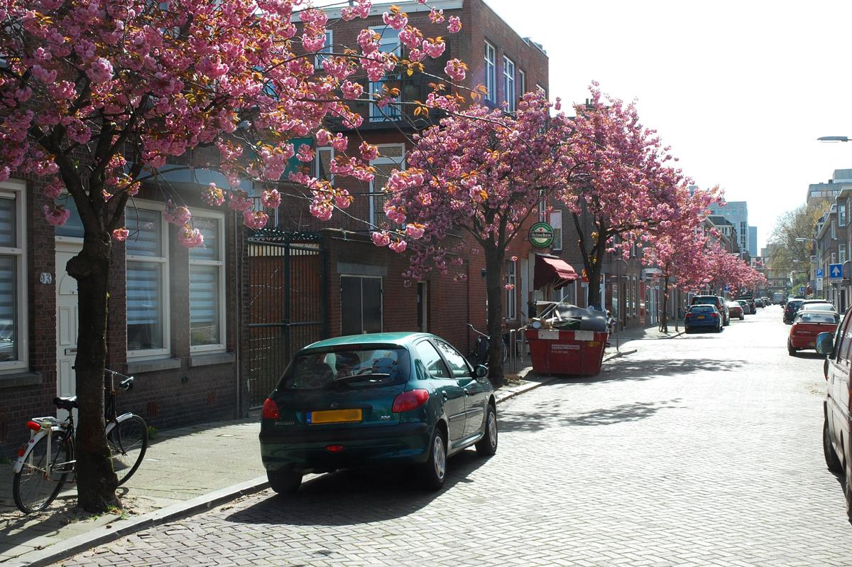 Bloeiende Bomen In De Willem Van Outhoornstraat In Den Haag