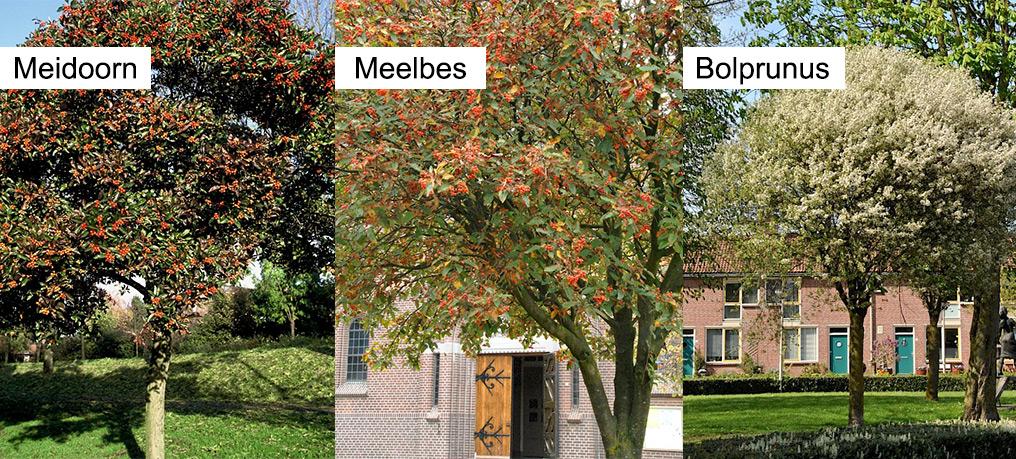 Boomkeuze Willem van Outhoornstraat